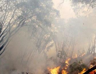 Incendios provocados por los narcos amenazan bosques vírgenes y maravillas arqueológicas