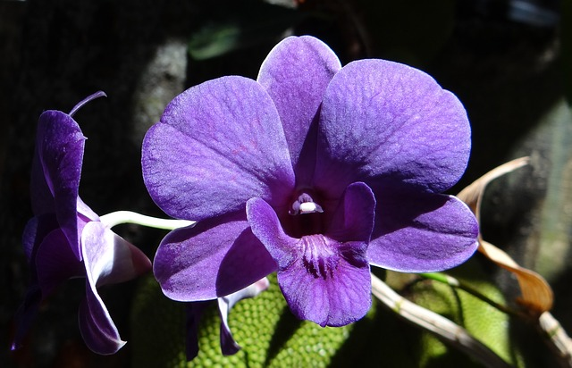 orchid-172206_640