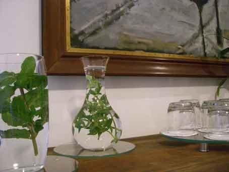 Sucos podem ser substituídos por Água aromatizada