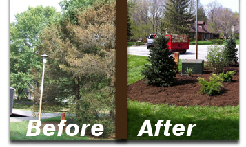 tree-planting-arbor-lafayette-indiana-green-care