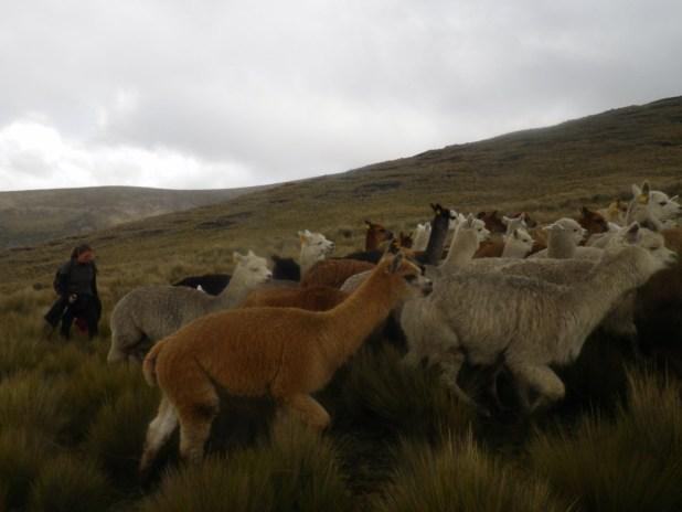 Volontariat en Equateur 2