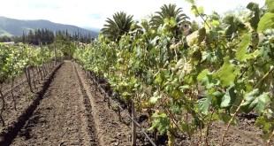 vin en Equateur 1