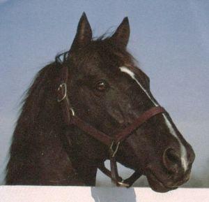 horse_halo-_2big