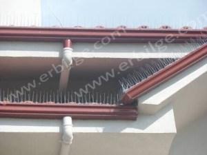 çatıda kuş dikeni montajı