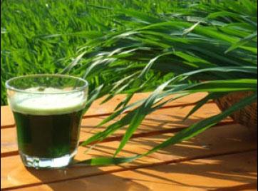 green-magma-verre-herbe-465fx349f