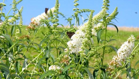 Flora & Fauna hinter dem Fotostudio