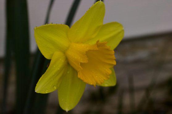 Rain-soaked Flower