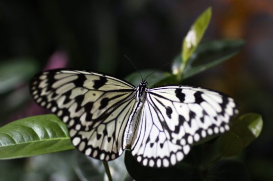 butterfly at Smithsonian - 2017-04-22T10:24:42 - 002