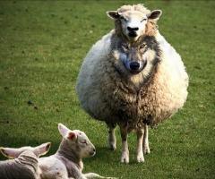 Cansei dos pastores da teologia da prosperidade