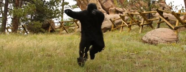 Cada vez, son más las situaciones que le preocupan al Gorila. Nuestra sociedad se ha visto limitada por la falta de conciencia al momento de […]