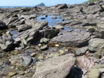 Wembury beach - rockpools