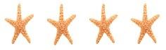 4 STARFISH