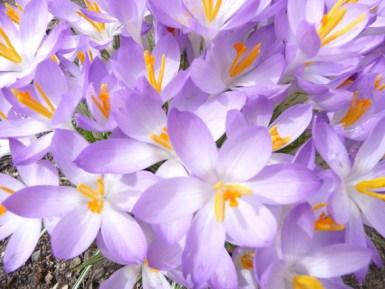 spring-flowers-1156519