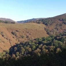 Bosque y brezal