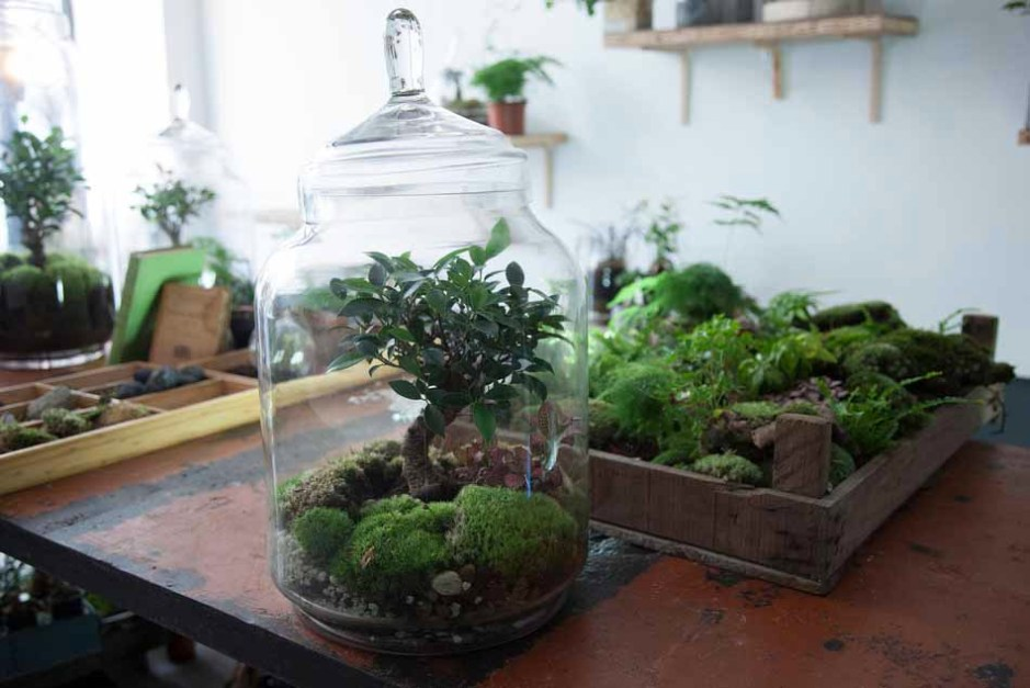 Les jardins de verre de la green factory esperluette - Cloche en verre jardin ...