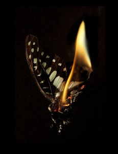 Mat Collishaw Burning Butterfly 1, 2013 fotografia C-type, 80x109cm