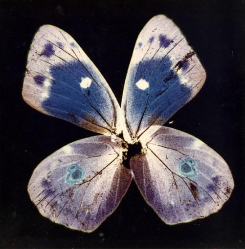 Nino Migliori, da Herbarium, 1974, C-print Vintage 02