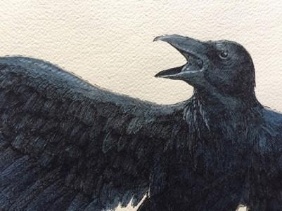 Vanni Cuoghi, Corvo, 2017, acquerello e china su carta, 70 x 100 cm, particolare
