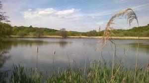 Thorrington Tide Mill Essex (34)