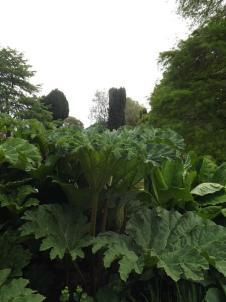 Beth Chatto Gardens (17)