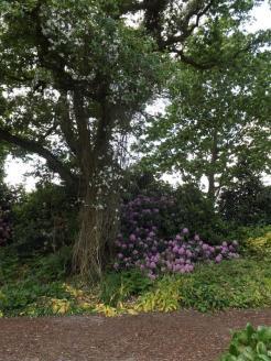 Beth Chatto Gardens (19)