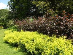 Beth Chatto Gardens (22)