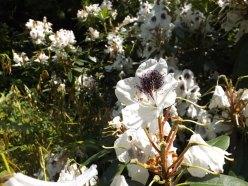 Beth Chatto Gardens (25)