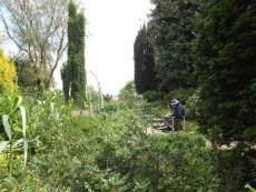 Beth Chatto Gardens (47)