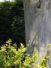 Beth Chatto Gardens (5)