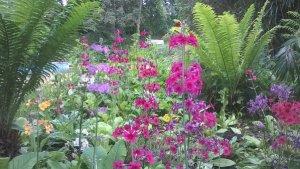 Feeringbury Manor Gardens (4)
