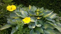 Feeringbury Manor Gardens (6)