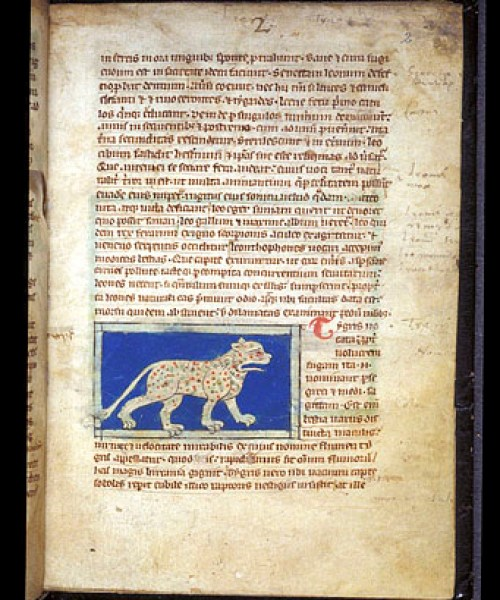 Sloane 3544 f.2 – Tiger