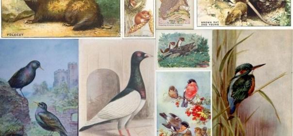 Animals and birds caught by the vermin man of Bishops Stortford, 1569-1571