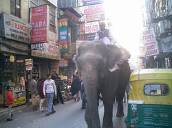 elephantone.jpg