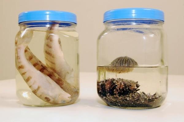 Também vai estudar alguns outros grupos, como peixes, ouriços, estrelas-do-mar.