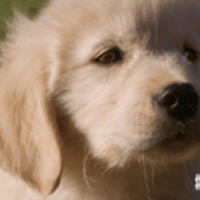 Watch: 'We're Listening, Message Received' GoDaddy Pulls Super Bowl 'Puppy Ad' Amidst Animal Lovers' Disgust