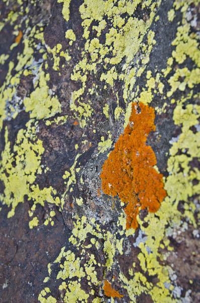 lichens in Death Valley National Park