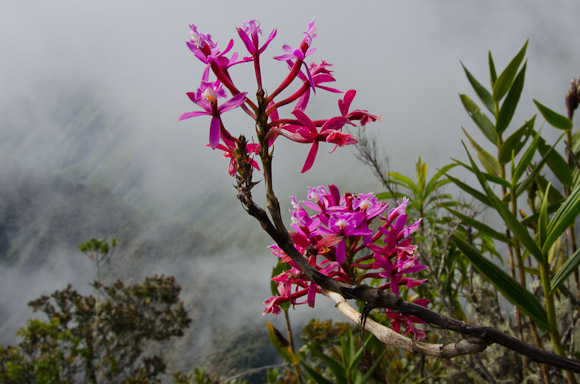 flowers-machu-picchu-mountain-1