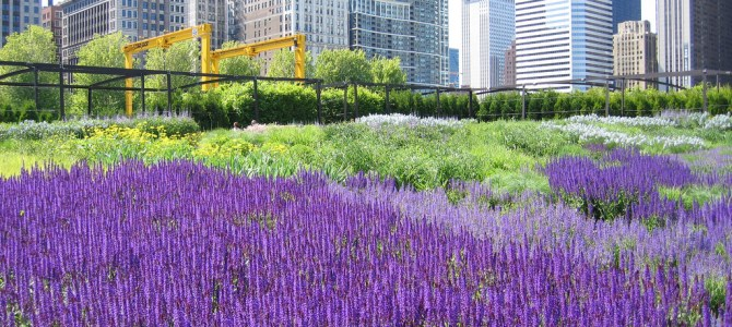 How To Travel Green in Eco-Friendly Chicago