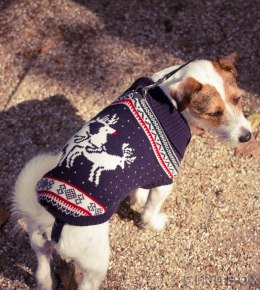 Christmas Jumpers for Dogs