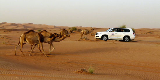 Dubai_Safari_Desierto_1