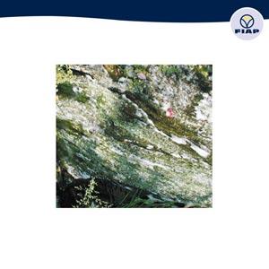 Fiap premiumcare wasserpflege exklusive gartenteiche for Gartenteichpflege algen