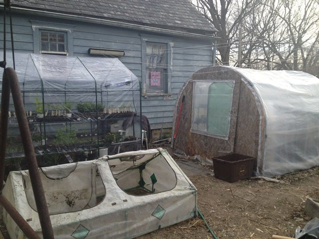 This is the view from the side doorway of the large greenhouse. You can see a small coldframe, a larger coldframe and the rear of the heated greenhouse. The brown container is used for compost.