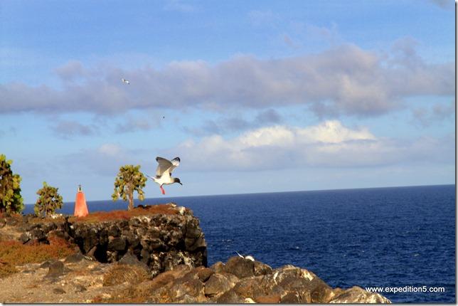 Les volatiles sont très présents aux Galapagos.