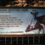 Spotting the Rarest Deer in the World