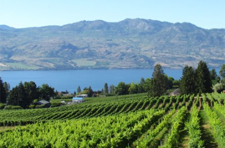 Protected: Painting Class Experience at Okanagan Vineyard