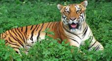 Nagarjunsagar Srisailam Tiger Reserve – World's Largest Tiger Reserve