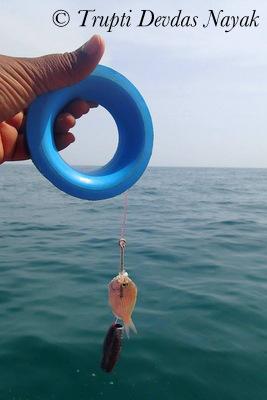 Line Fishing Bait Isla Holbox Mexico