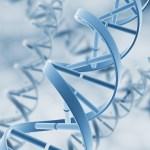 幹細胞による長寿延命