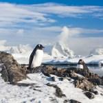 ファーストペンギンにならないという戦略